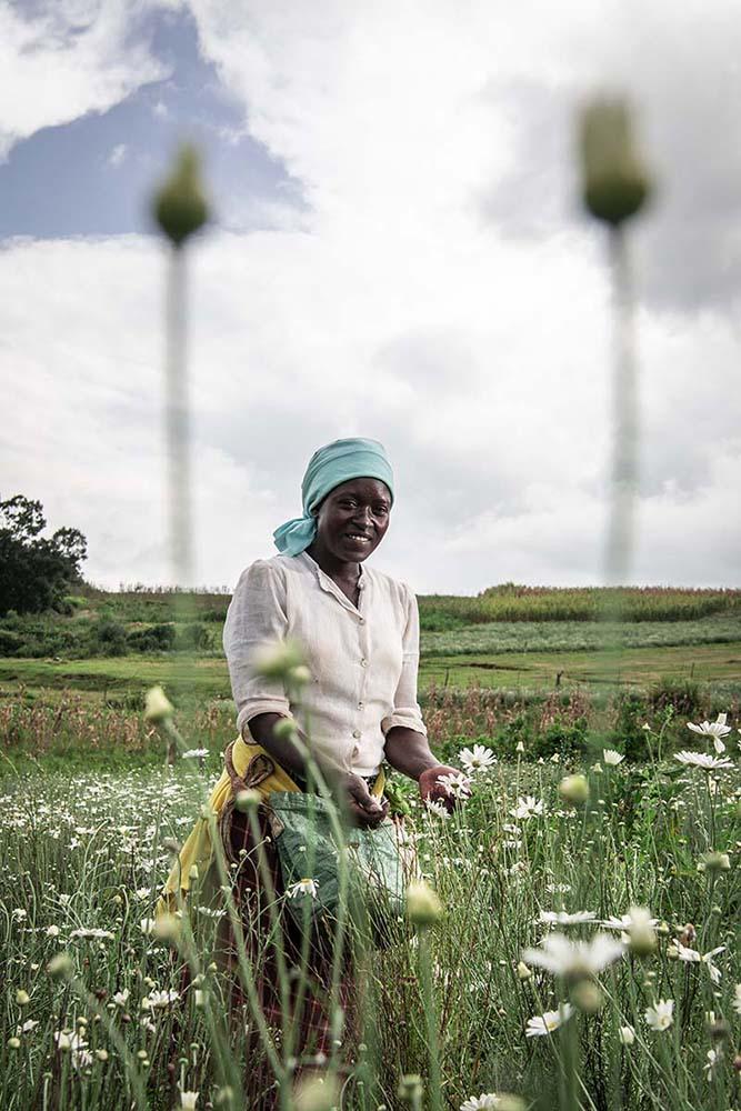 The Killing Daisy - Vito FUSCO finalista del SONY WORLD PHOTOGRAPHY AWARD 2021